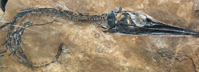 240 million-year-old fossil of fish